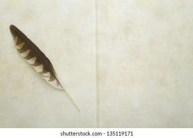 Antique book and hawk feather