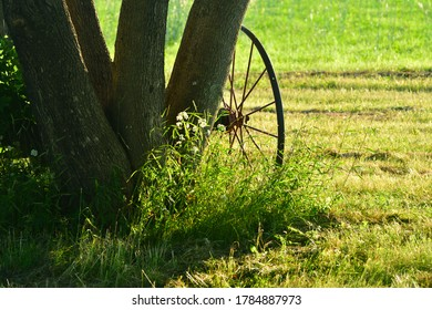 Antique Hay Turner Wheels Against a Tree Trunk at Dusk in Summer