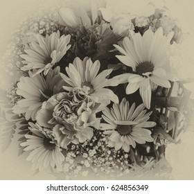 Antique monochrome bouquet of daisies