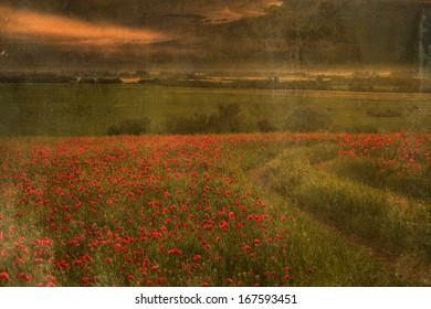 Antique photo of beautiful poppy field