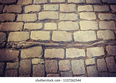 Antique stone pavement with tree roots encased in the ground