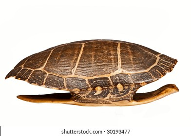 Antique turtle shell, isolated.