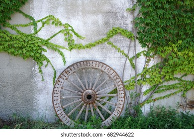 Antique and weathered wood cart wheel with vine green leaves