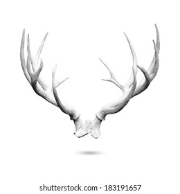 Antler replicas, made of cement, isolated on white background with clipping path.