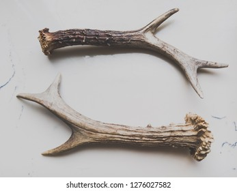 Antlers lying collaterally on a light background
