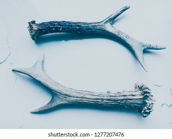 Antlers lying collaterally on a light background (light blue shadow)