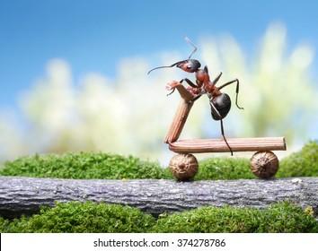 ants bike