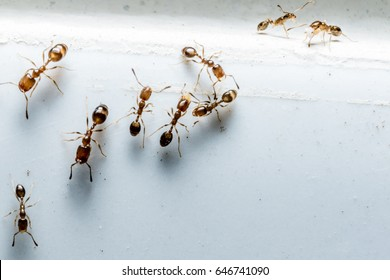 Ants with Bluish Background in macro