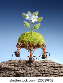 ants bring piece of living nature at empty rock. Federal ant programs in some countries help forests to survive, with a little help from small friends