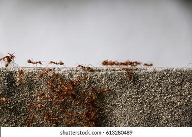 Ants community
