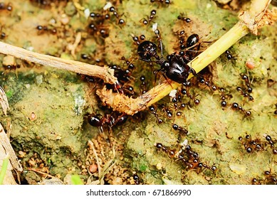 Ants are ants of different sizes, both large and small.