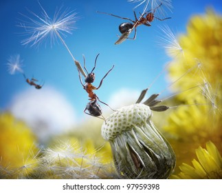 ants flying away with crafty umbrellas - dandelion seeds, ant tales