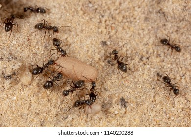 Ants and formic eggs in nature