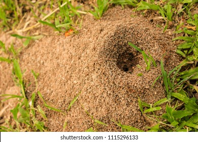 Ant's Hill with spherical cone consists of soil and sand digging from the ground