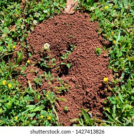 Ant's Hill with spherical cone consists of soil and sand. Croatia