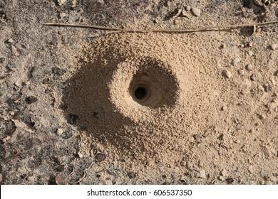 ants hole