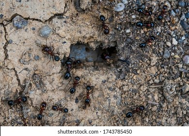 Ants. Macro photo. Colony of termites. House of ants. Ants are working. Formic prey. Ants at the entrance to the termite mound. Clods of land. Sand. Small stones