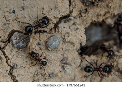 Ants. Macro photo. House of ants. Ants are working. Ant prey. Ants at the entrance to the termite mound. Clods of land. Sand. Small stones