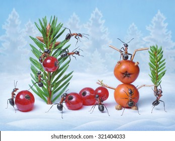 ants make Christmas tree and Santa Claus for New Year, ant tales