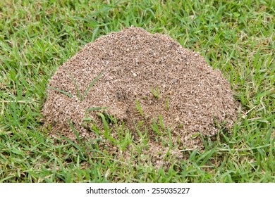 Ants nest in the grass.