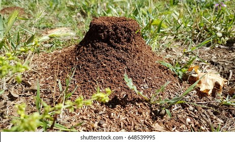 ants nest home in spring - greece