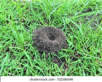 Ants' nest on the green grass