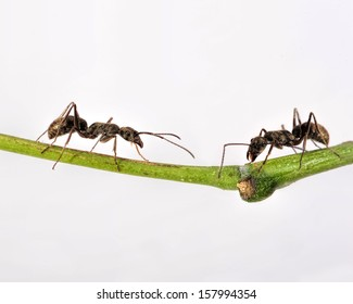 ants on a green grass
