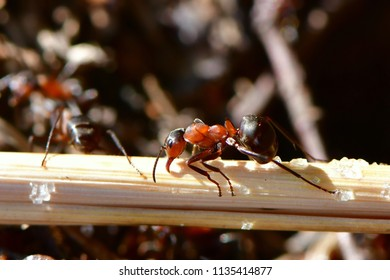 ants on straw looking for food