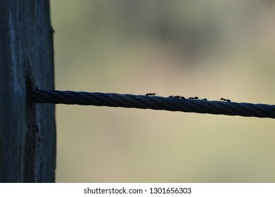 ants on the wire