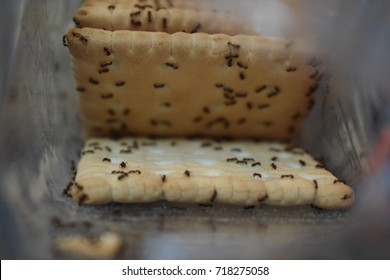 ants in a plastic bag with cookies eating