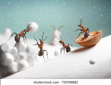 ants ride sledge and play snowballs on Christmas
