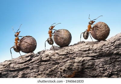 ants roll heavy stones uphill at rock, teamwork concept