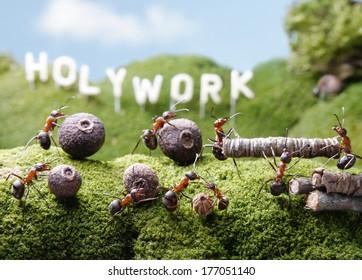 ants teamwork at Holywork hills, Ant Tales