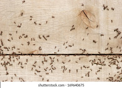 Ants transporting things in the nest