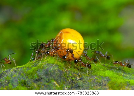 Ants Working Together Carry Food Stock Photo Edit Now 783825868