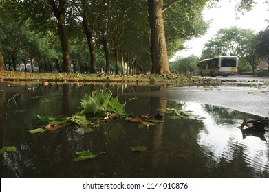 Antwerp/Belgium-july 26 2018  heavy rainfall after heatwave leaves trees damaged and floods streets