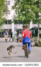 ANTWERP-MAY 21, 2018. Man cycling with his dog on a leash in the center of Antwerp. In Belgium it is prohibited to cycle with a dog on a leash. Penalties are very steep and can go up to 250 euro.