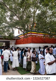 Anuradhapura, Shr Lanka - January 27, 2019: The Bodhi tree at Mahabodhi temple, Anuradhapura, Shri lanka. Devotees are gathering beneeth the holy tree.