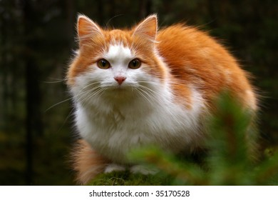 anxious cat staring