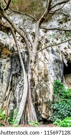 Ao Phra Nang Cliff swallow tree, trail to the beach in Souther Krabi Thailand