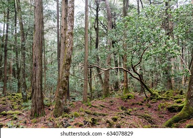 Aokigahara is a forest that lies at the base of Mount Fuji,also known as the Suicide Forest or Sea of Trees, Aokigahara Forest is a popular destination for tourists and school trips