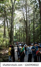 Aokigahara (The Suicide Forest), Kawaguchiko, Japan - July 2018 : Young students are queuing up to leave the Suicide Forest during a school field trip.