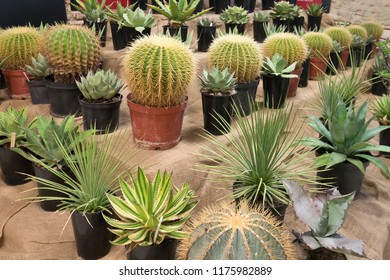 A aollection of cactusses in the planters