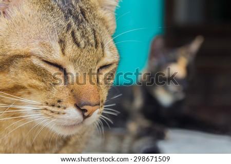 Apart Face Cat Soft Brownorange Color Stock Photo Edit Now