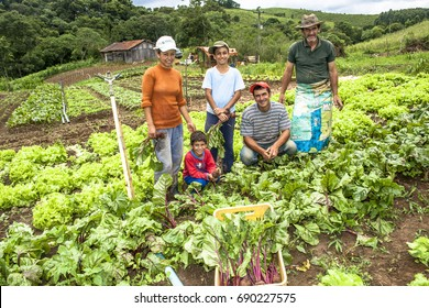 Apiai, Sao Paulo, Brazil, December 18, 2009. Family of farmers in a beet plantation