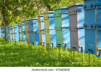 Apiary in apple orchard