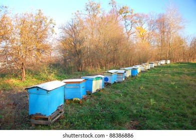 Apiary in the autumn