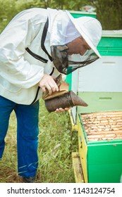 apiary beekeeper. Beekeeper is working with bees and beehives on the apiary.