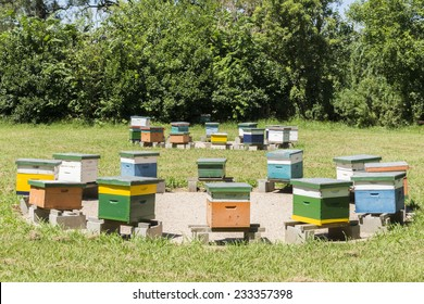 Apiary or group of beehives forming circles