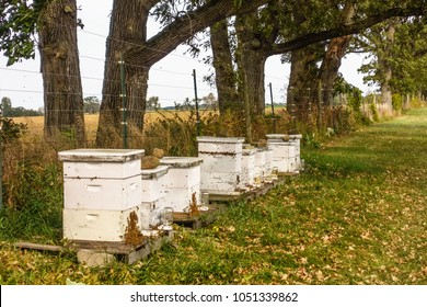 Apiary with swarming honey bees by electrified fence on a fruit farm in northern Illinois, USA, for themes of beekeeping, pollination, agriculture